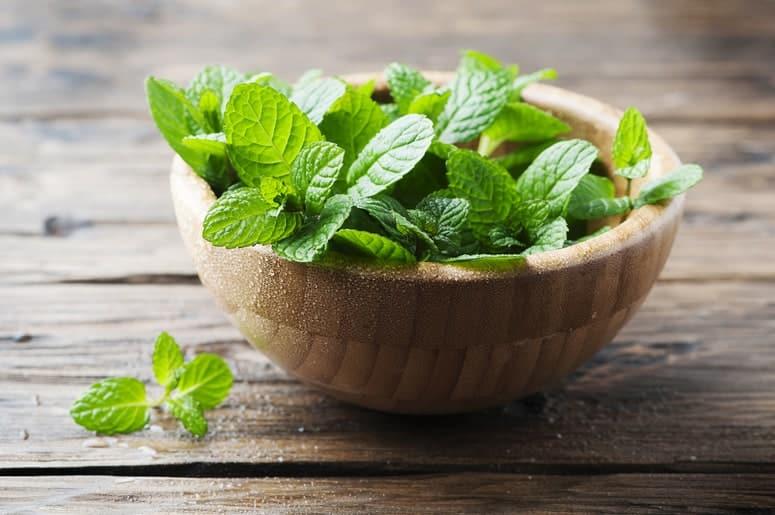 La imagen puede contener: planta, cerámica, jarrón, frasco, planta en maceta, menta, maceta y hierbas
